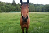 Staring horse — Stock Photo