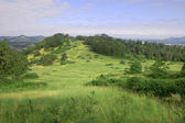 Grass hill with trees ontop of Mount Pisgah, Oregon — Stock Photo