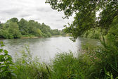 River with grass and trees under an overcast sky — Stock Photo