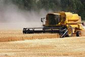 Récolte de blé — Photo