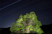 Dotted Star Trails — Stock Photo
