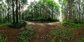 360 Panorama of forest — Stock Photo