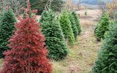 красная рождественская елка, выделяясь из толпы — Стоковое фото
