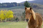 мокрый коричневый пони портрет перед пейзаж. — Стоковое фото
