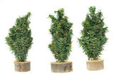 Miniature plastic christmas tree figures — Stock Photo