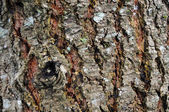 Old rough grunge brown tree texture close up — Stock Photo