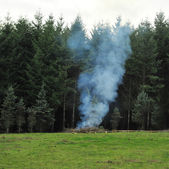 Forest Burning — Stock Photo