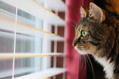 Cat Looking out window at day — Stock Photo