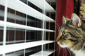 Cat Looking out window — Stock Photo