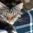 Closeup of snoozing cat — Stock Photo