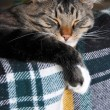 Cat dozing on the couch - Lizenzfreies Foto