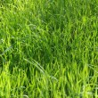 Stock Photo: Long Uncut Grass