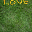 Love written in dandelion flowers — Stock Photo