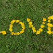 Love written with Flowers in the Grass — Stock Photo