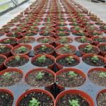 Plants Inside Greenhouse Nursery Garden — Stock Photo