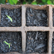 Stock Photo: Growing small plants