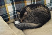 Cat sleeping on couch — Stock Photo