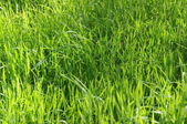 Long Uncut Grass — Stock Photo