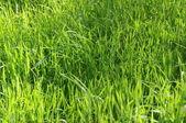 Long Uncut Grass — Stock Photo