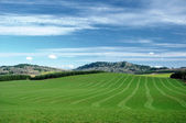 Agriculture hills — Stock Photo