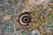 Spy hole — Stock Photo