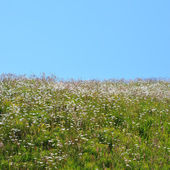 Uphill grass field — Stock Photo
