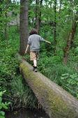 Walking on a fallen tree in a forest — Stock Photo