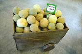 Cantaloupe on sale at grocery store — Stock Photo