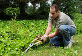 Trimming Plants Outside — Stock Photo