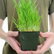 Holding Wheat Grass - Stock Photo