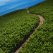 Narrow Path - Stock Photo