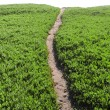 Dirt Pathway Leading onto Horizon — Stock Photo #4646269