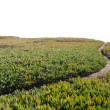 Dirt Pathway Leading onto Horizon — Stock Photo #4646277