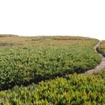 Dirt Pathway Leading onto Horizon — Stock Photo