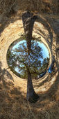 Dos árboles — Foto de Stock