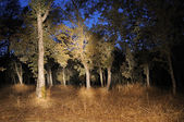 Forest Tree Woods Light Painting at Night — Stock Photo