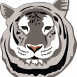 White Bengal Tiger — Stock Vector