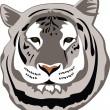 Tigre de Bengale blanc — Vecteur