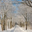 Winterlandschaft — Stock Photo