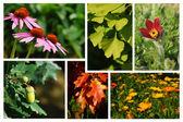 Arzneipflanzen - Collage — Stock Photo