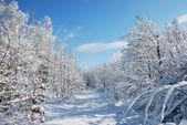 Winterlandschaft — Stock Photo