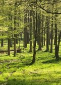 Wald im Licht — Stock Photo