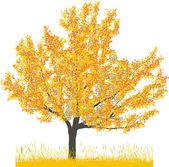 Cherry tree in autumn — Stock Vector