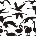 silueta del cisne — Vector de stock