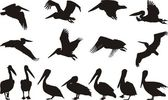 Pelican Silhouettes - Vector — Stock Vector