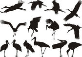 Stork silhouettes - vector — Stock Vector
