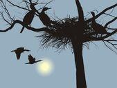Nidificazione cormorani — Vettoriale Stock