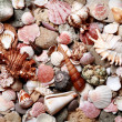 sea shells and pebble — Stock Photo