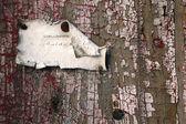 Calling card on old door — Stock Photo