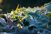 Zmrazené rostlin pozadí — Stock fotografie